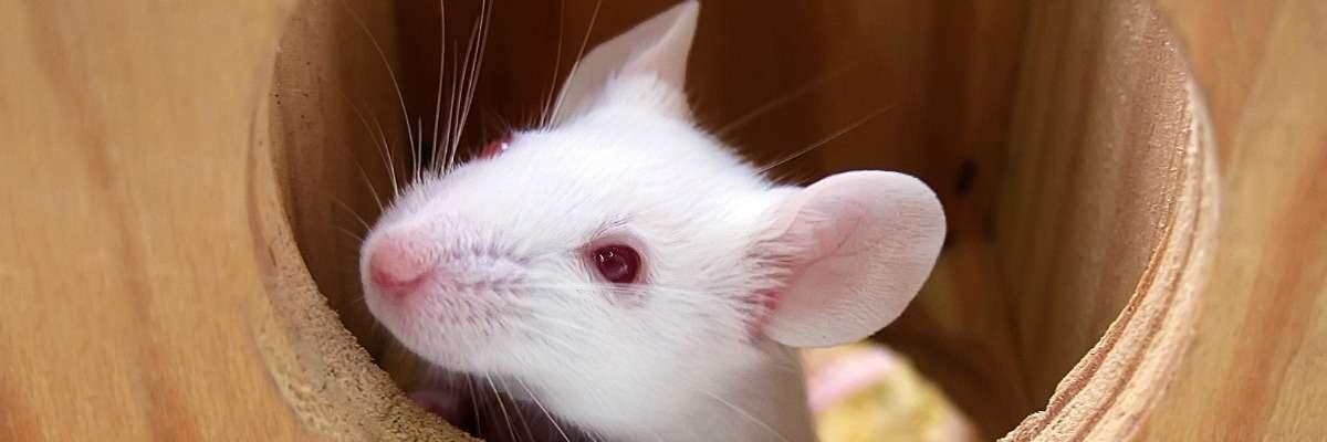 Top 10 Animal behavior research blogs