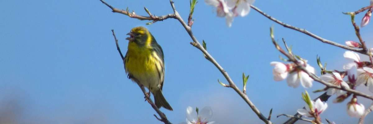 Beautiful birds and UV – What we cannot see
