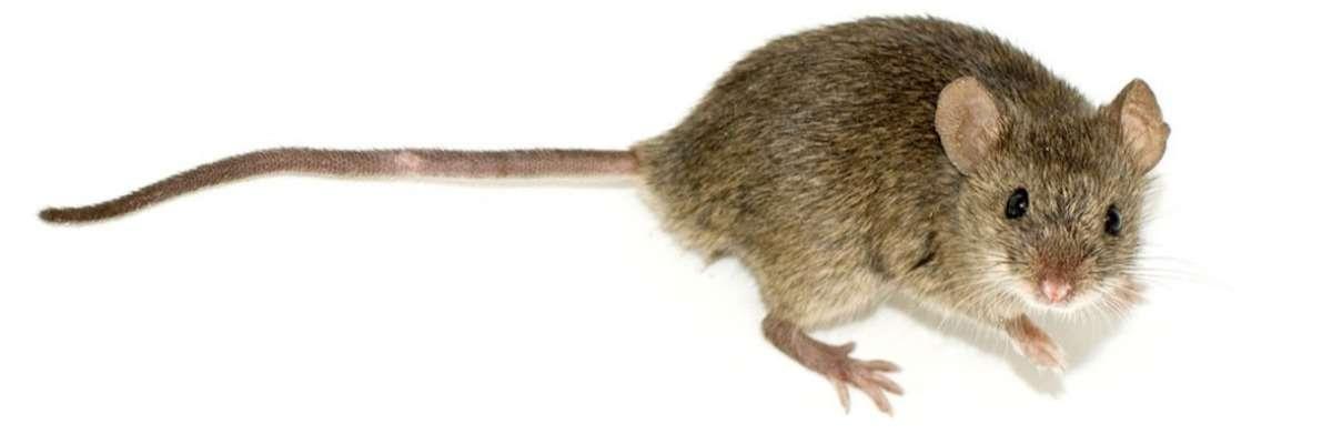 How mice regain their memory: Betaine against Alzheimer's Disease
