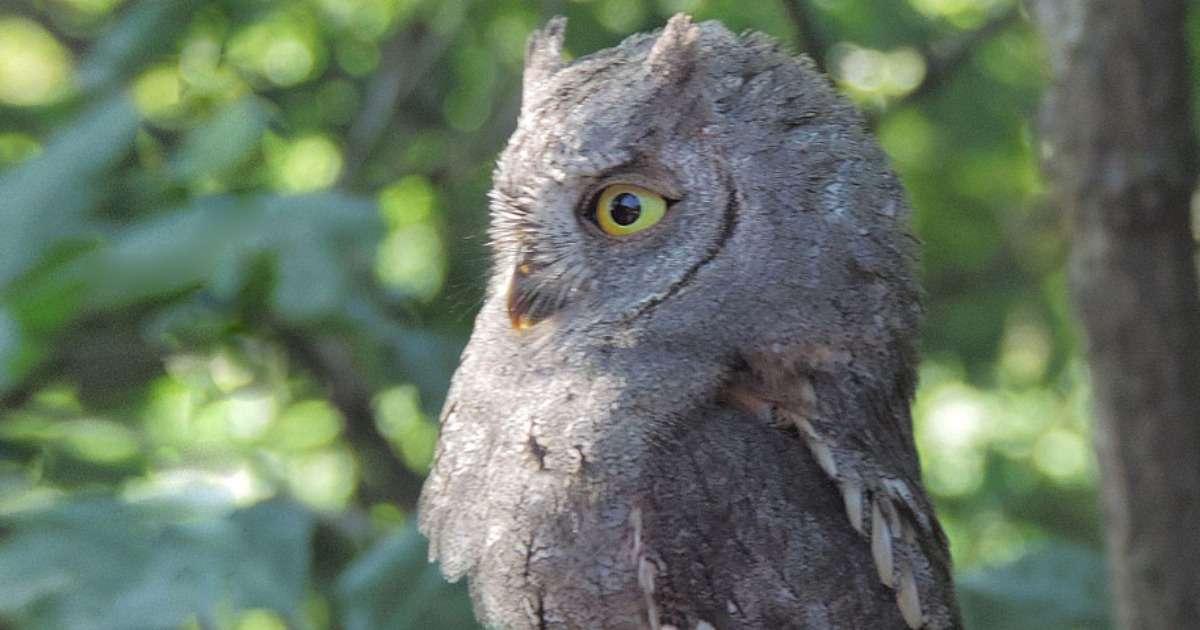 bird-calls-ultravox-xt