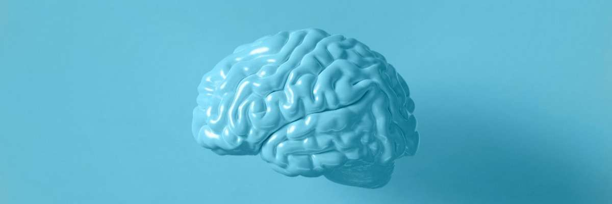 Cognitive neuroscience: Behavior