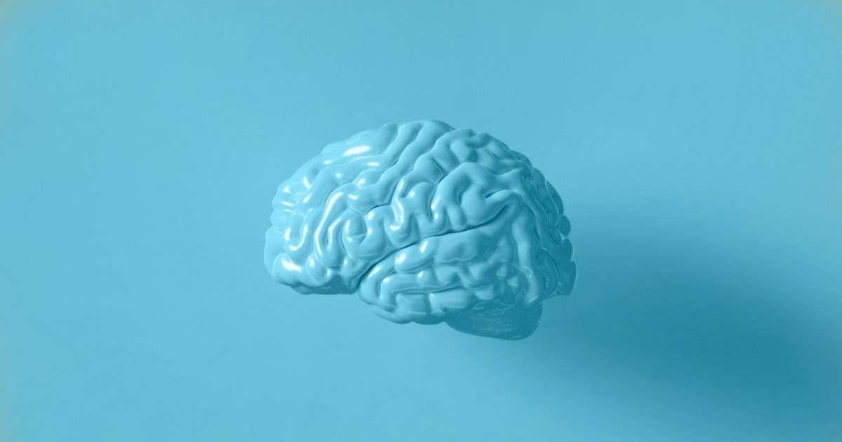cognitive-neuroscience-behavior