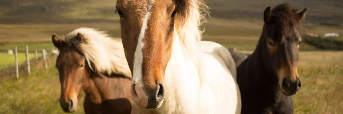 Brain & behavior: data integration in horse studies