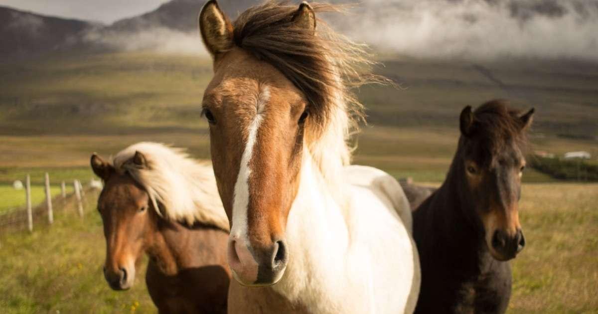 data-integration-horse-studies