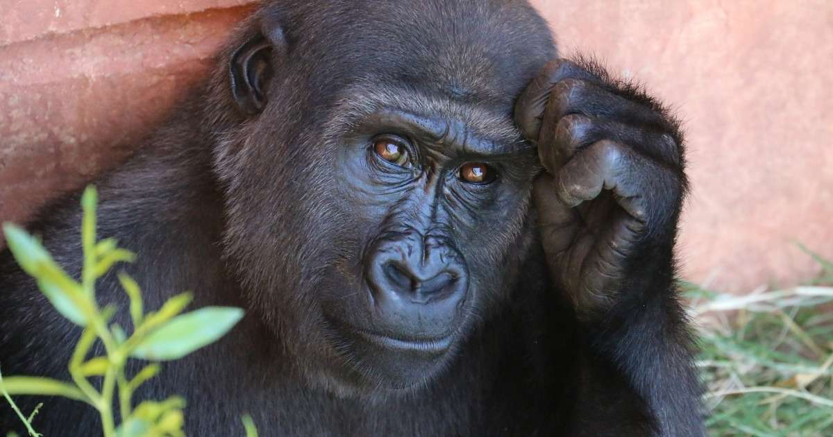 examples-animal-behavior-research