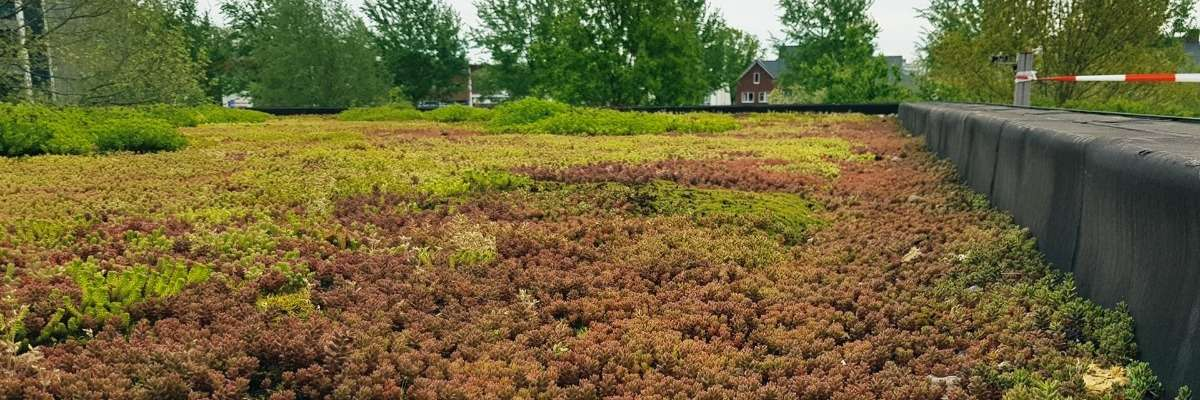 How we turned our office into a living lab with a green roof