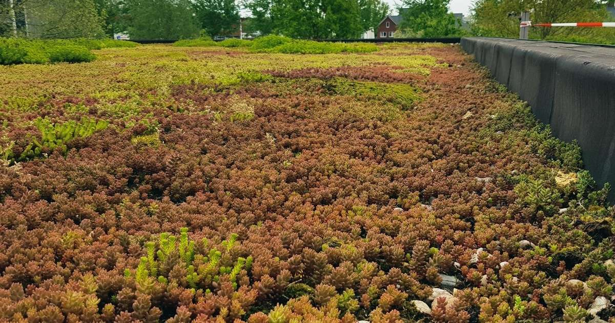 green-roofs-research-biodiversity