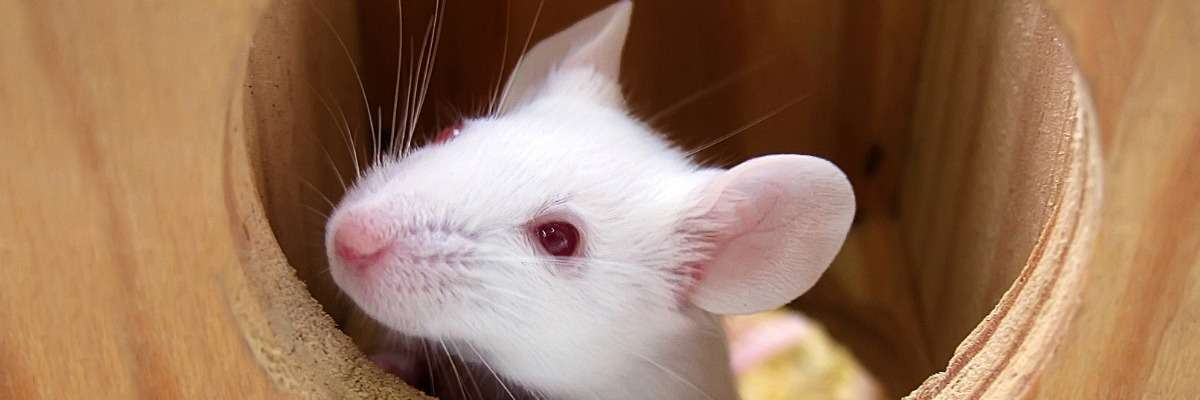 A high-throughput method to screen natural behavior of mice