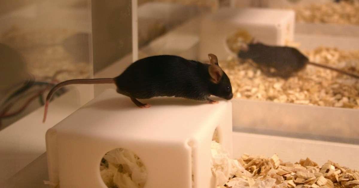 home-cage-study-epilepsy-mice