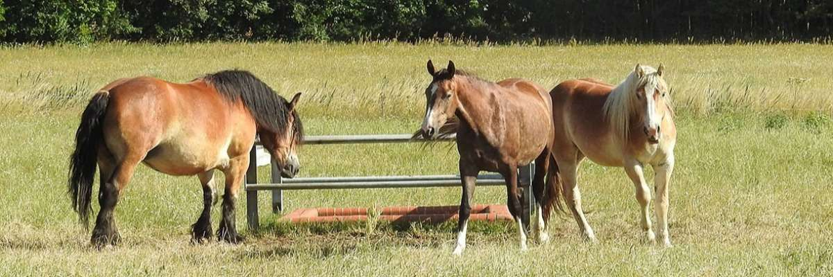 Horse training methods: The importance of behavioral analysis