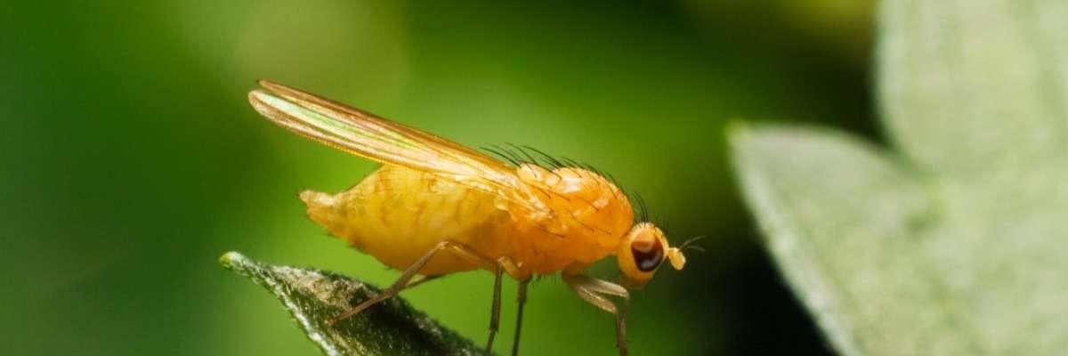 How autistic fruit flies behave