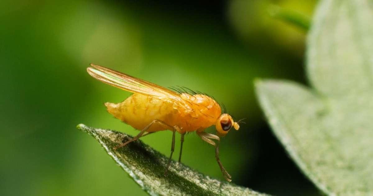 how-autistic-fruit-flies-behave