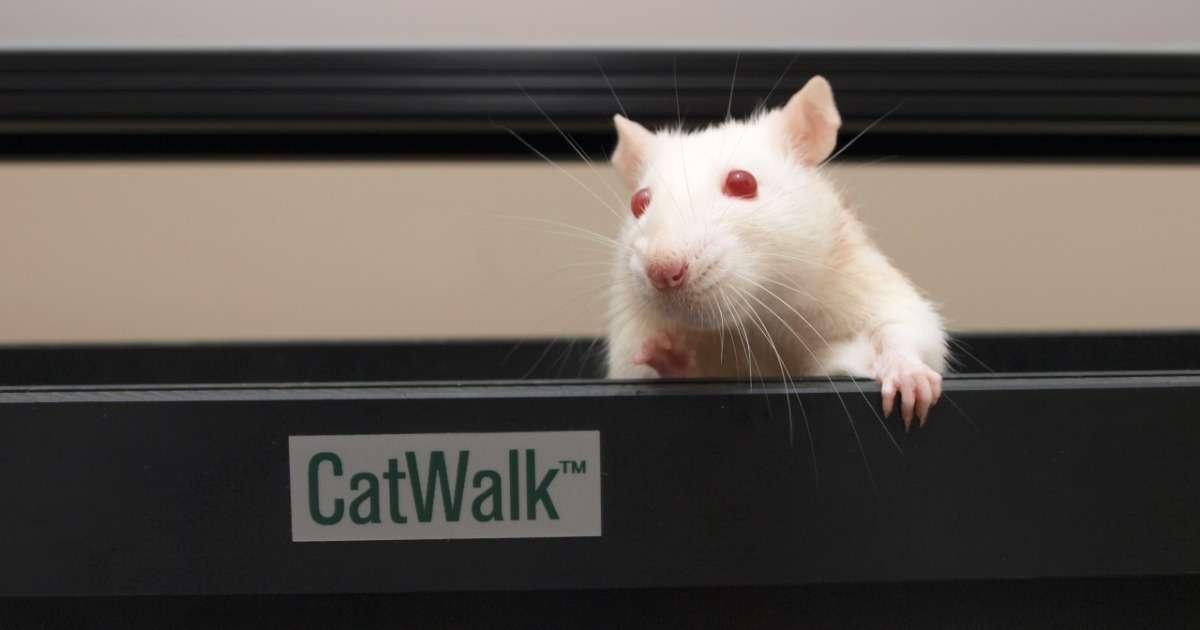 how-use-catwalk-xt