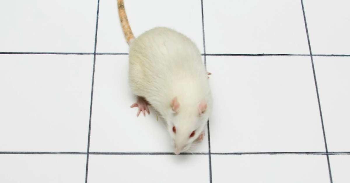 l-dopa-and-parkinsonian-rats