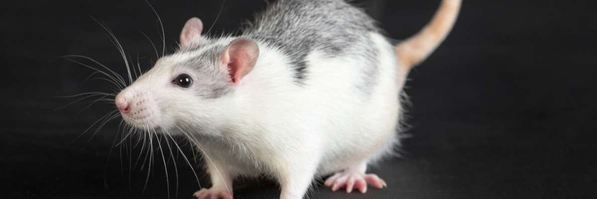 Walking the ladder: testing the cellular source of motor functioning in mice