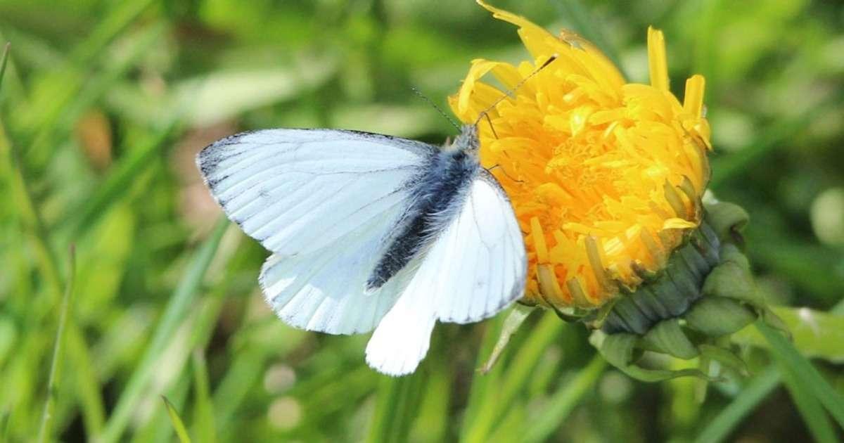 optimizing-pollination