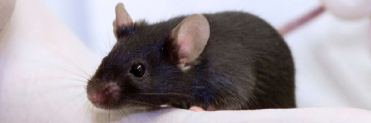 Behavioral effects of optogenetically induced myelination in mice