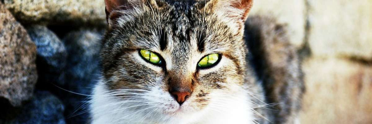 Picky cats and tasty food – sniffing is an indicator for tastiness