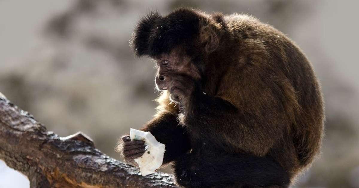 unraveling-primate-behavior