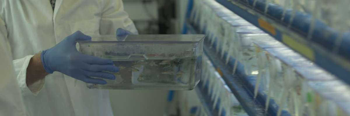 What is DanioVision? A brief insight in zebrafish tracking